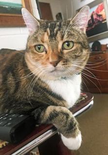 cat-disinterested